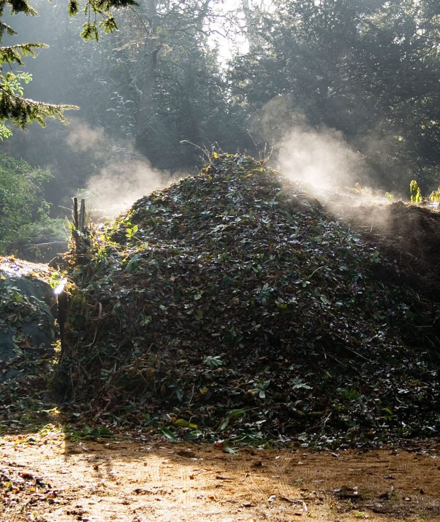 A large compost pile generating steam in the early morning.