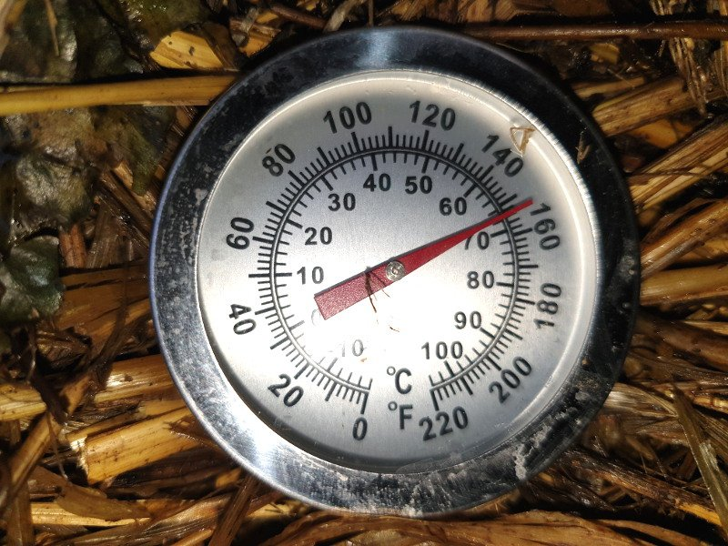 Compost thermometer showing 66 degrees centigrade.